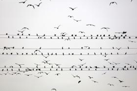 Yoshinori Mizutani | 鸟