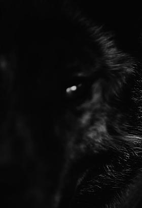 【孤独,深藏人性深处的野兽】