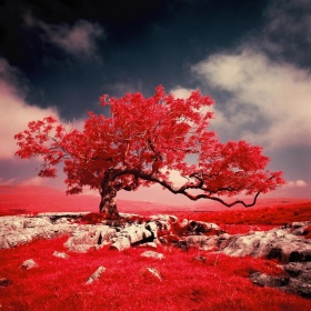 Mark Rowell | 红