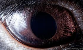 Suren Manvelyan | 动物之眼