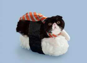Cats + Sushi