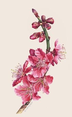 Eunike Nugroho | 水彩,花