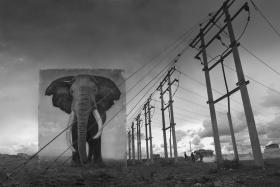 Nick Brandt  震撼心灵的动物肖像
