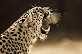 Goran Anastasovski 野生动物摄影