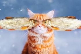 猫咪Kotleta的炫酷艺术照 | 俄罗斯摄影师Kristina Makeeva
