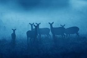 Simon Roy 野生动物摄影