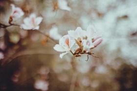 < 春暖花开 >