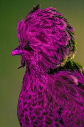 Dan Bannino | 鸟的时尚大片