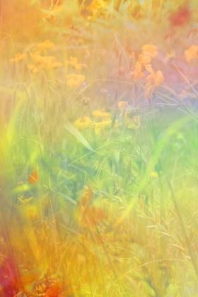 Jordan Sullivan 野花