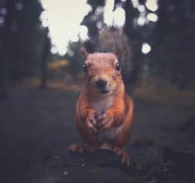 Konsta Punkka | 动人的野生动物影像