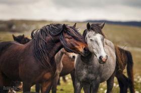 摄影师Carina Maiwald | 以梦为马