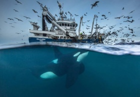2016年度野生动物摄影优秀作品