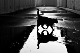 喵星人的黑白影像