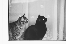 摄影师Monika Małek的黑白影像记录 |喵星人日常