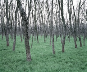摄影师Daniel Kovalovszky    树