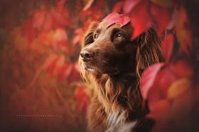 摄影师Anne Geier |秋天的汪星人