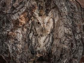 Graham McGeorge |猫头鹰的伪装艺术