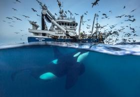 Audun Rikardsen |北极,鲸