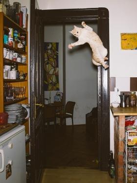 Daniel Gebhart de Koekkoek|飞翔的喵星人