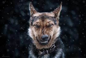 乌克兰摄影师Sergey Polyushko | 动物肖像