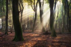 森林之光|摄影师Albert Dros