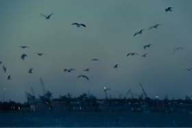 Oh lazy seagull fly me from the dark. #色彩系列#