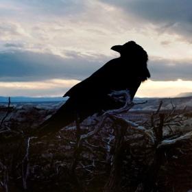 美国西部 |摄影师Jef Bonifacino