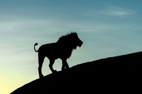 非洲大草原,动物剪影 |摄影师Marc Mol