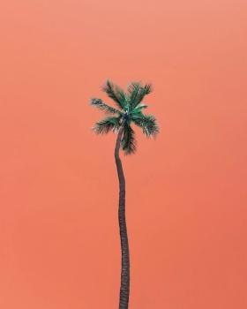 夏威夷   摄影师Arytron Page
