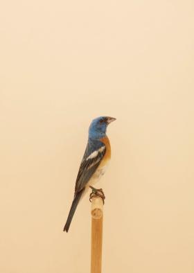 鸟 |摄影师Luke Stephenson 