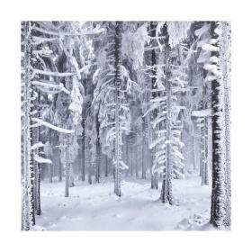 正方形的冬天  摄影师Kilian Schönberger