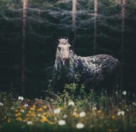 旅行在路上   摄影师Konsta Punkka 