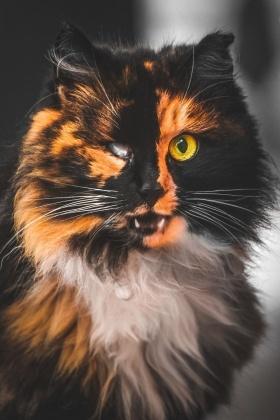 流浪猫肖像 | 立陶宛摄影师Gabrielius Khiterer 