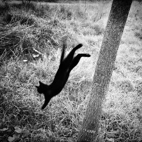 流浪猫 |摄影师Ekin Kucuk 