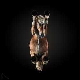 别样的视角 |摄影师Andrius Burba镜头里的马