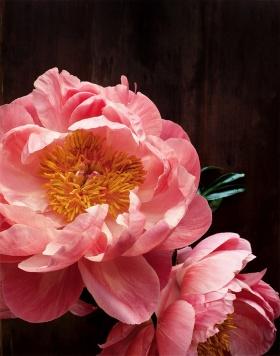'Dark Botanical' by Kari Herer