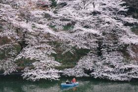 春 ,日本|摄影师Takashi Yasui