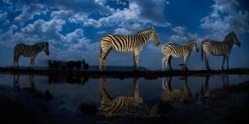 星空下的动物 |摄影师Bence Máté