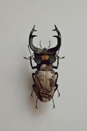 Oil on Beetle by Akihiro Higuchi