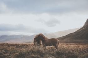 冰鸟 |摄影师Luke Gram