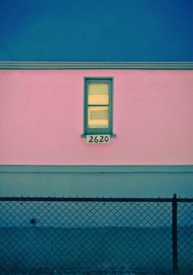 Pink | David Jordan Williams