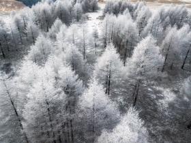 日本的冬天|摄影师naagaoshi