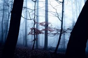 薄雾森林 | Oliver Henze