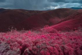 红外风光 | Al Mefer