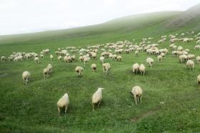 Hulun Buir
