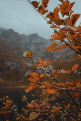 诗意的旅行 | Chris Henry