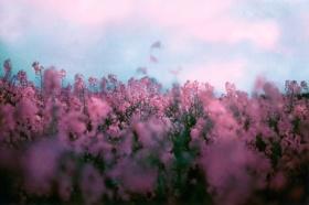 梦幻的生活影像 | Maya Beano 