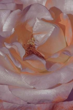 花儿 | Xuebing DU