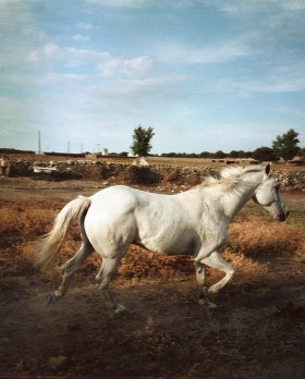 质感的生活影像记录 | Laurent Laporte 