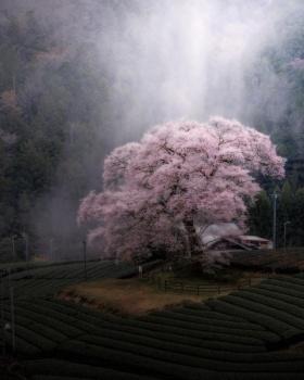 春 | 日本摄影师Hiro Goto